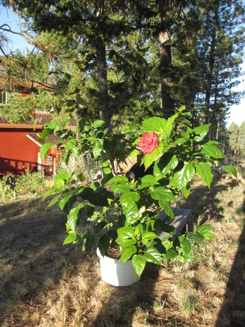 margrit-plant